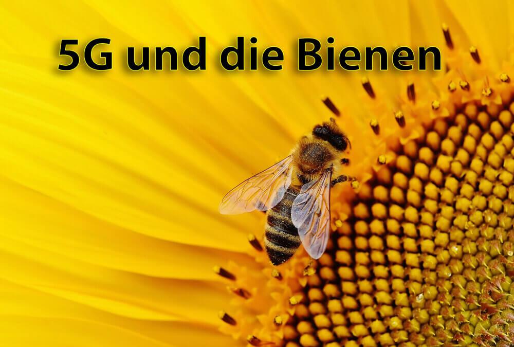 5G die Bienen und die Mikrowellen