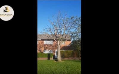 Bäume sterben in England
